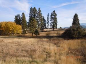 Pilcher Creek Reservoir Field